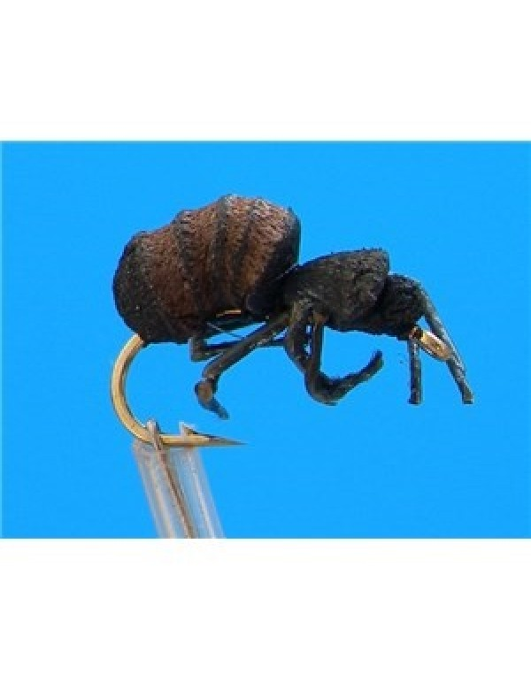 FTW CIMMANON ANT