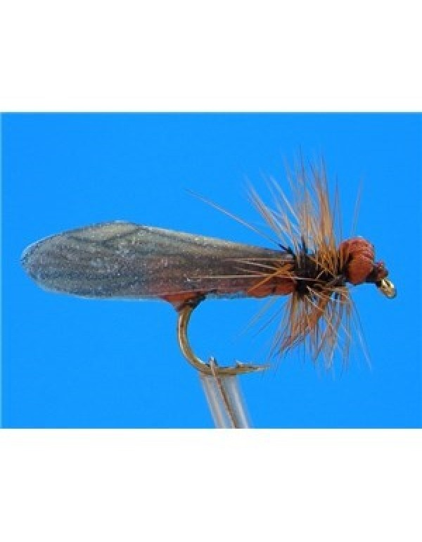FTW BROWN CADDIS