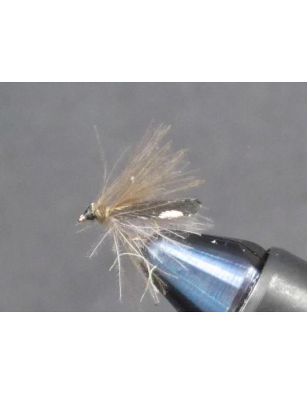 EUM 047 Guinea CDC Sedge