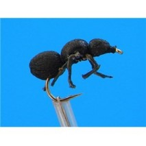 FTW BLACK ANT