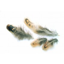 HEN PHEASANT FEATHERS
